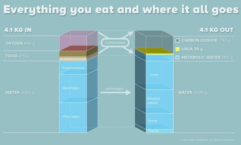 En que se transforma la grasa durante la pérdida de peso